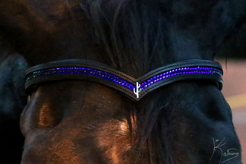Browband with Cactus and Crystals
